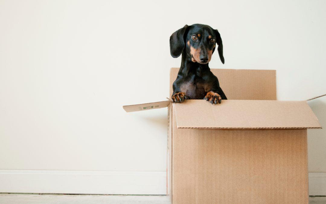 que faire des cartons après déménagement